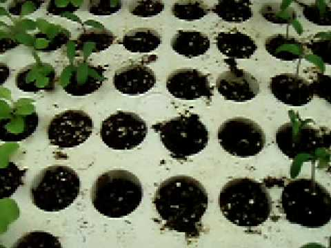2009Feb20 Aerogarden seed starter tray