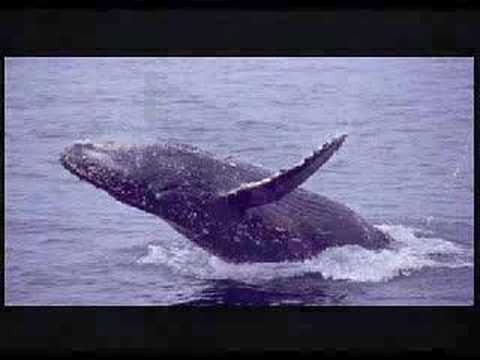 Dance of the Humpback Whales
