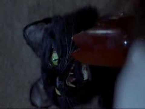cat fight (scary movie 2)