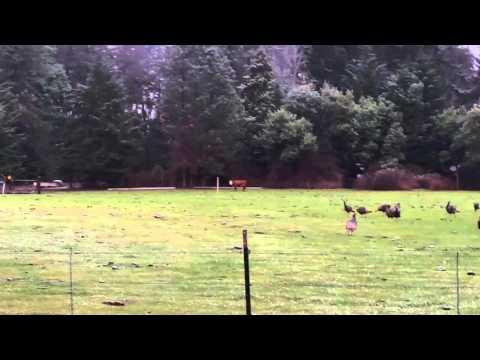 Off grid solar homestead (wild turkey convention)