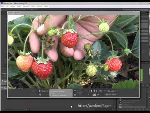 Вывод готового проекта в Adobe Encore CS6