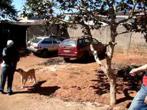 Polícia Civil invade imóvel e recupera carro furtado ALFENAS HOJE / Henrique Higino