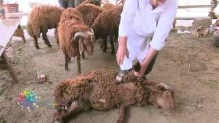 ازاي تدبح خروف بنفسك؟