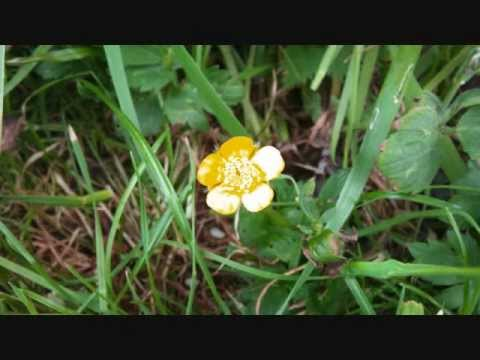 Martha Wainwright - These Flowers