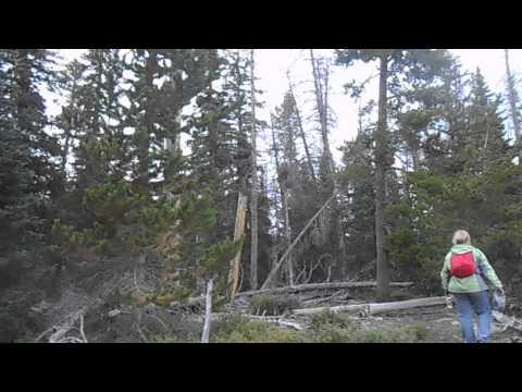 Yellowstone Canyon Bigfoot Hair, two large samples taken. RMSO