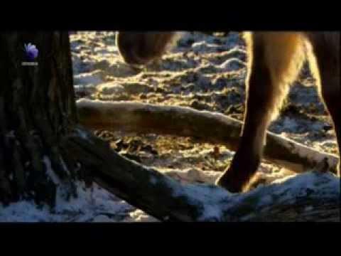 Os Ultimos Cavalos Selvagens Da Europa - docsPT