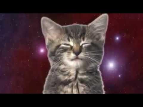 Космически котки
