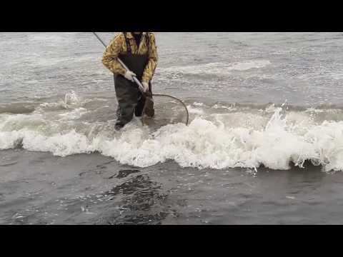 Самая быстрая рыбалка на Камчатки