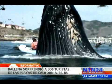 Ballena sorprende a turistas en las playas de California