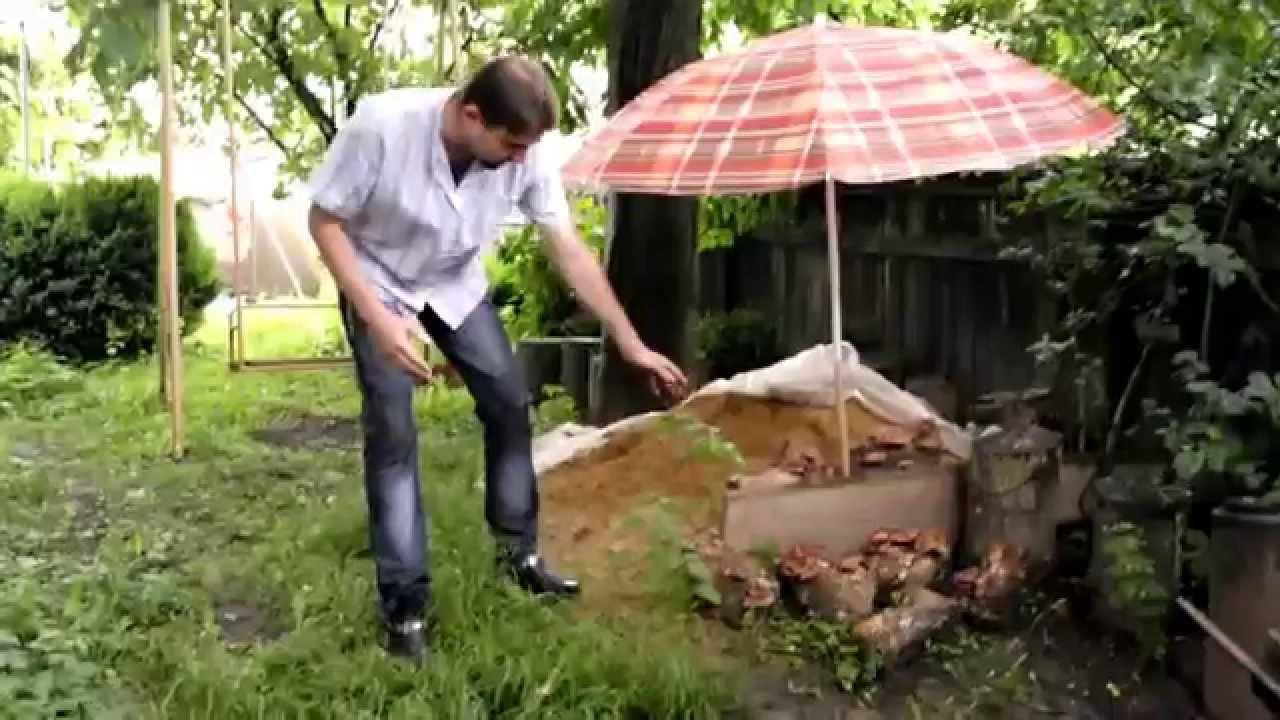 Выращивание грибов на садовом участке для новичков 42