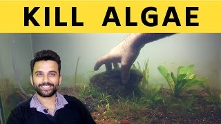 Simple Way To Remove Algae From Planted Tank
