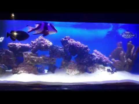 Update on 125 gallon marine aquarium fowlr