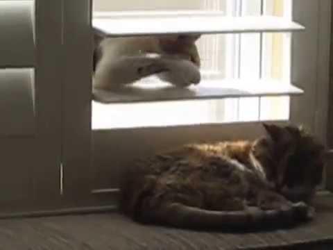 猫が寝ている猫にいたずら...