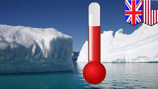 Antarctica melting: Seabed life doubles in ocean warming study - TomoNews