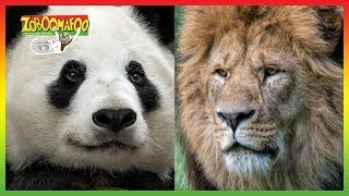 🐵 Zoboomafoo | Season 1 Episode 1-5 Compilation | Animals for Kids 🐵