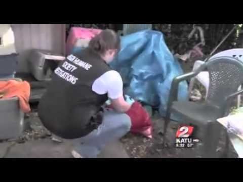 Humane Society pulls dozens of cats from filthy home