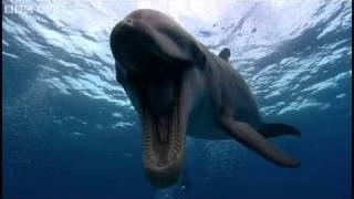 Farting Dolphin - Funny Talking Animals - Walk On The Wild Side preview - BBC One