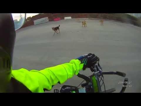 развели собак (строительство новой ленинградки)