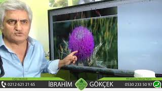 İbrahim Saraçoğlu Lavanta Ile Hepatit Tedavisi,İbrahim Saraçoğlu Lavanta Ile Hepatit Kürü