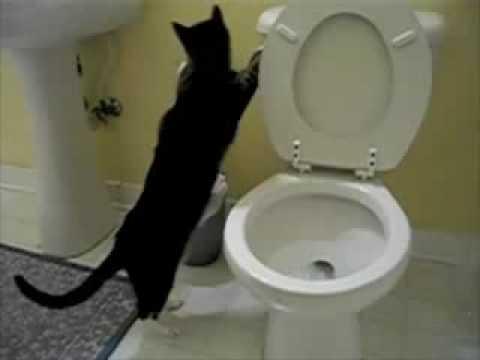 Parry Gripp - Cat Flushing A Toilet