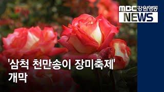 R)'삼척 천만송이 장미축제'개막