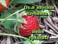 Клубника в умных грядках! Planting strawberries in smart beds!