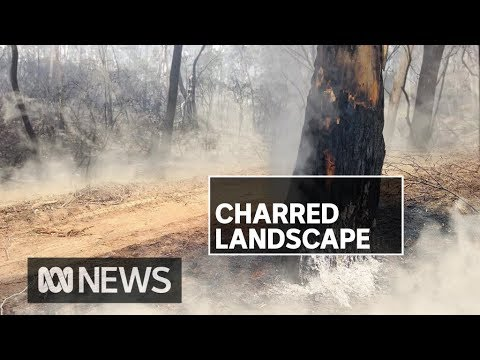 Fires destroy more property in Victoria as military, volunteers ramp up disaster relief | ABC News