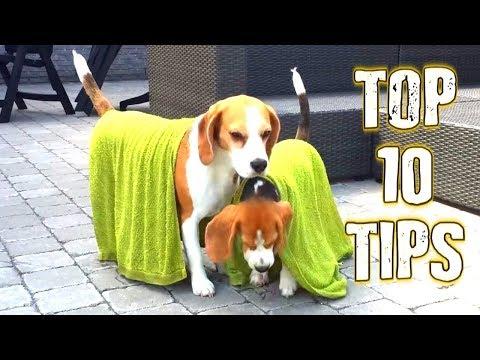 Cómo mantener al perro fresquito