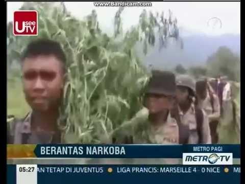 Berita Terbaru  Polisi Musnahkan Tiga Hektar