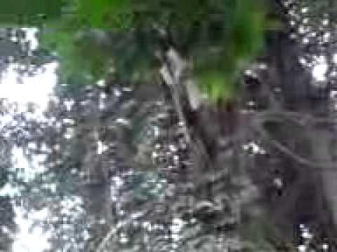 Penampakan kunti disiang hari-kuburan cibalong sari karawang