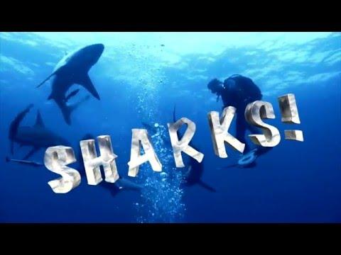 Shark talk - Marine and Coast Activity program