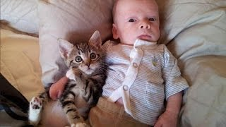 Cats and babies are best friends – Cute baby & cat compilation