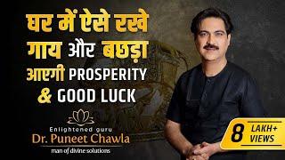How Cow & Calf Bring Prosperity in life? Vastu Remedy cow & Calf
