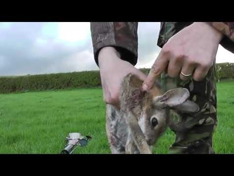 Air rifle rabbit hunting