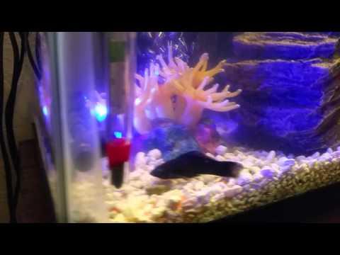 Aquaponic filter set up! AquaDuo!