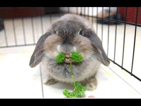 Cute Rabbits YouTube