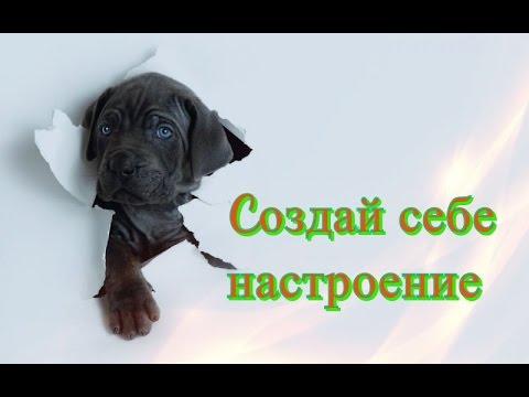 Позитив Смешное видео о животных для детей Кошки собаки Создай себе хорошее настроение