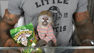 BABY MONKEY REACTS TO WARHEADS!!