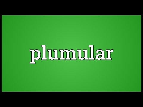 Header of plumular
