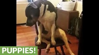 Weirdo dog decides to sit in chair like a human