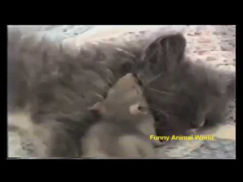 Funny Animals. Best jokes and situations for august 2015. [Funny Animal World]