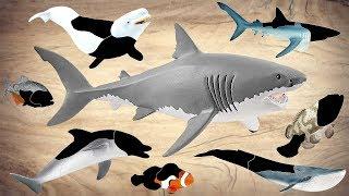 Sea Animals For Kids! Sea Animals Learn Name and Sounds  Beluga Blue Shark Finding Nemo Piranha