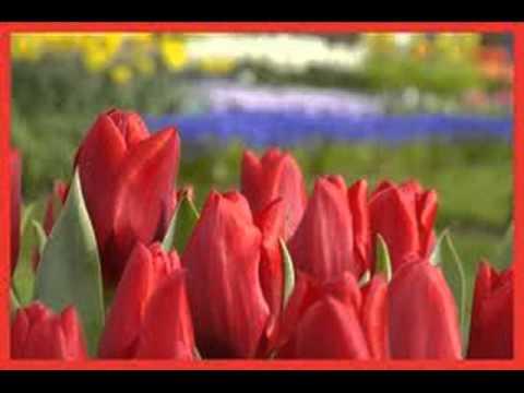 bloemen zijn rood