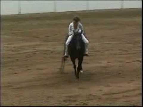 Lady riding Horse