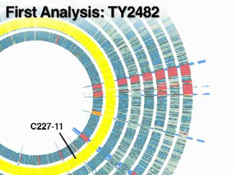 Comparison of Genomes of Eight Enteroaggregative E. coli  O104:H4 Isolates