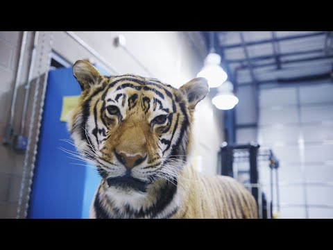 The Wildlife Warehouse: Where the U.S. Government Sends Illegal Animal Goods