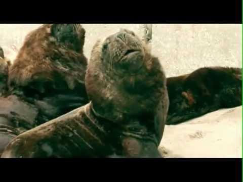 Investigación con lobos marinos