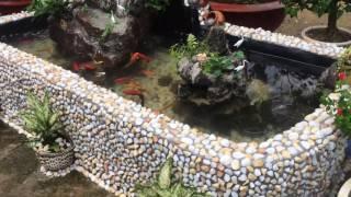 Hồ cá chép koi tự làm