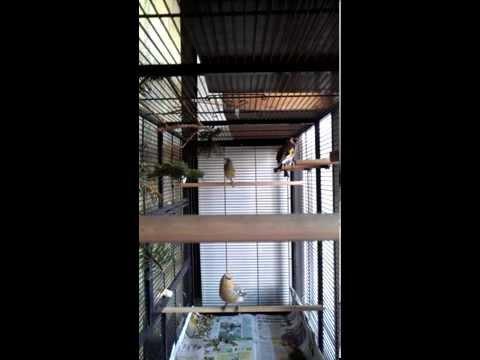 Певчие птицы в моем вольере Вольер для певчих птиц Triol 81x47x176 см 5005