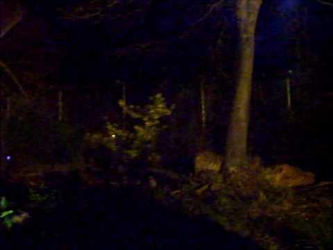 夜の虎 富士サファリパーク